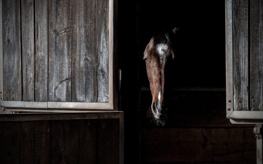 Andelsspel, en häst i sin box. Redo för v75 och vinst på andelsspel i helgen.
